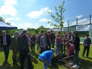 Baumpflanzen Internet 7JPG